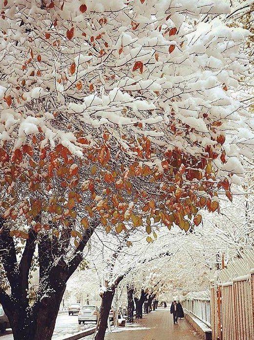 Mesmerizing Tabriz in snow #Tabriz, #Iran  @ifilmenglish