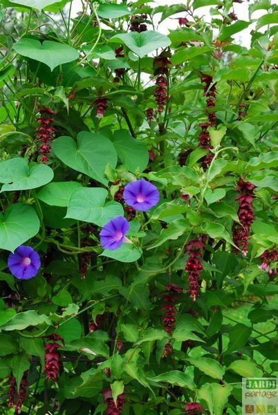 5317 best le jardin se partage images on pinterest gardening permaculture and garden. Black Bedroom Furniture Sets. Home Design Ideas