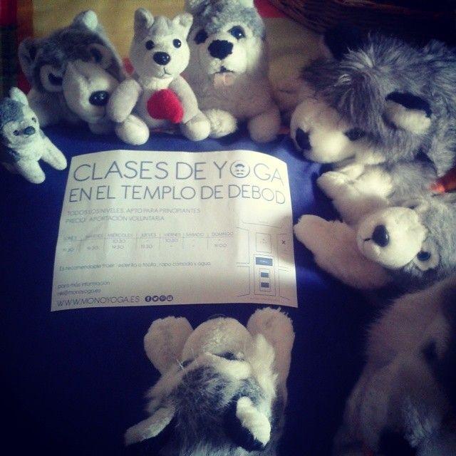 ¡Mami, mami! ¿Cuándo nos vas a llevar contigo a las clases de #yoga en el #TemplodeDebod? #animales #huskies #peluches #pelucheando