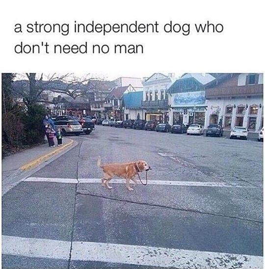 I Walk Myself, Thank You #lol #haha #funny