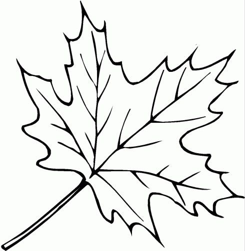 Coloriage Feuilles !