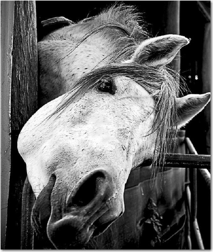 les 11 meilleures images du tableau scrap theme cheval sur