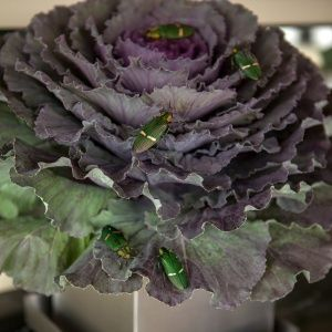 Devil's in the Details Awesome bugs in the ornamental cabbage.  Perfect for the Halloween Buffet Table