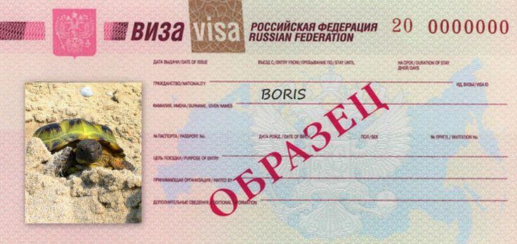 schildpad Boris is een Russische Viertener