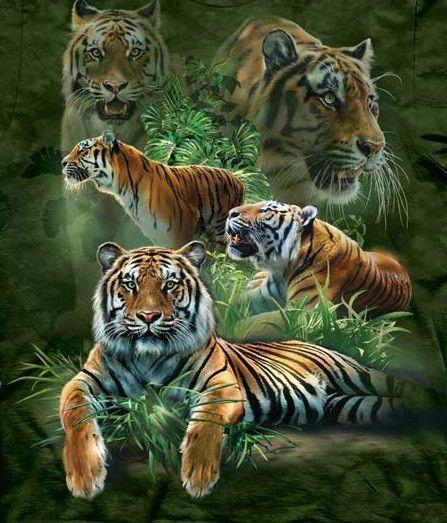 Tiger Hoodie | Jungle Tigers