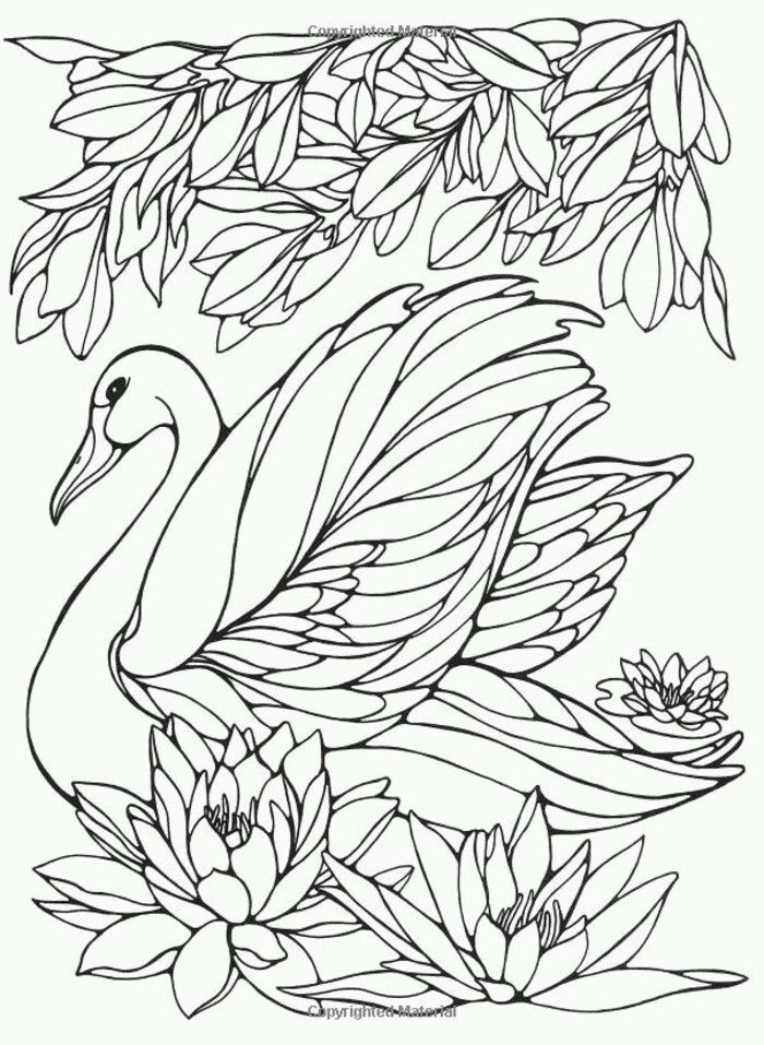 Swan Birds Ruth Heller Coloring Page For Callie