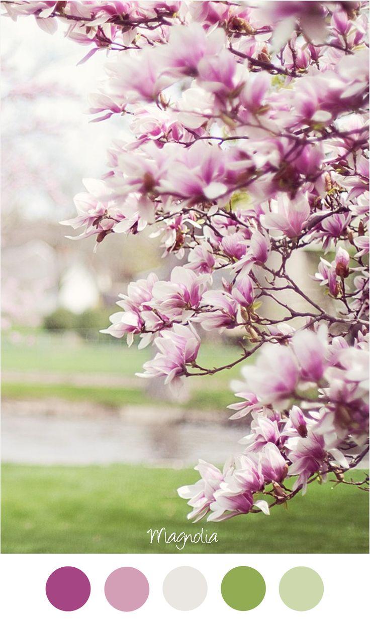 Magnolia - Mooie kleurencombinatie Roze / paars en zacht groen.