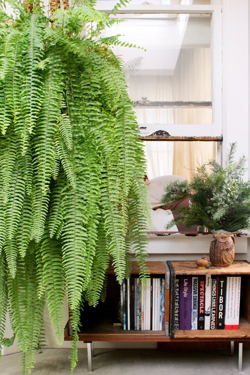 ferns for the wedding --   Design Sponge - Gregory Beauchamp: I've found that the secret to ferns is to water them on Sundays and Wednesdays. The bookcase was made from two vintage wooden crates and a cut-up towel rack from Home Depot.  It's surprisingly sturdy, sits next to my desk and holds books on a few of my idols of design.