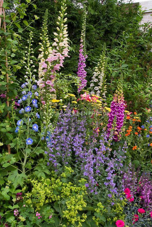 garden flower border design - Google Search