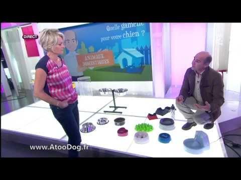 VIDEO - Gamelle Anti glouton - France 2 09-04-2014 - YouTube