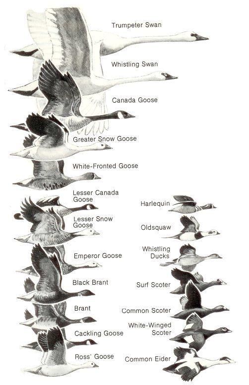 548 best Birds of Houston & Texas images on Pinterest