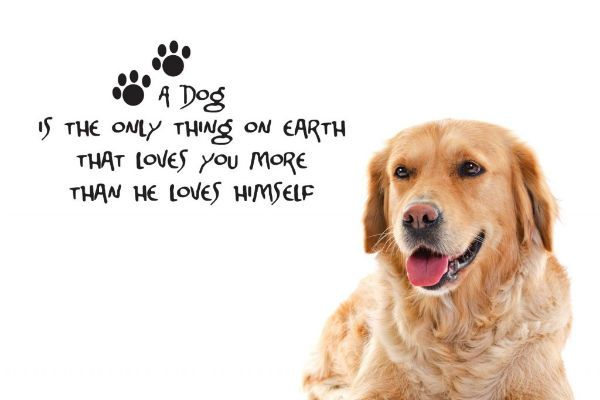Quotes About Pet Dogs   Inspiring Quotes About Dogs – Aside From Being A Loyal Companion ...