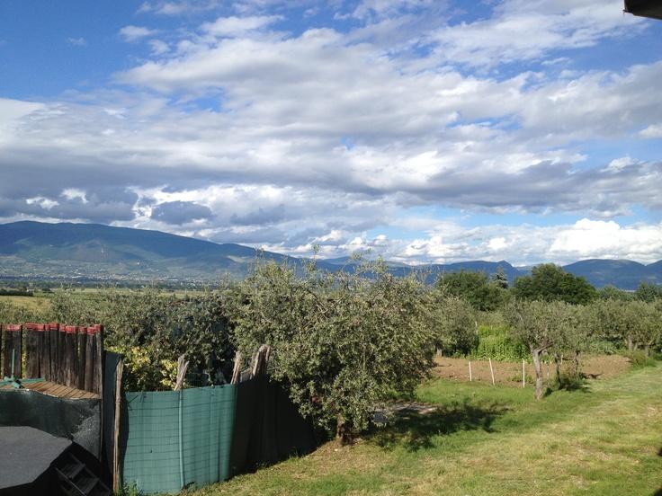 vineyards landscape from Montefalco hills, umbria