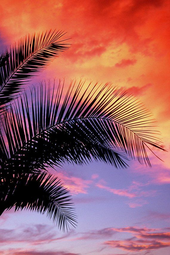 Palm And Sand Trees Beach