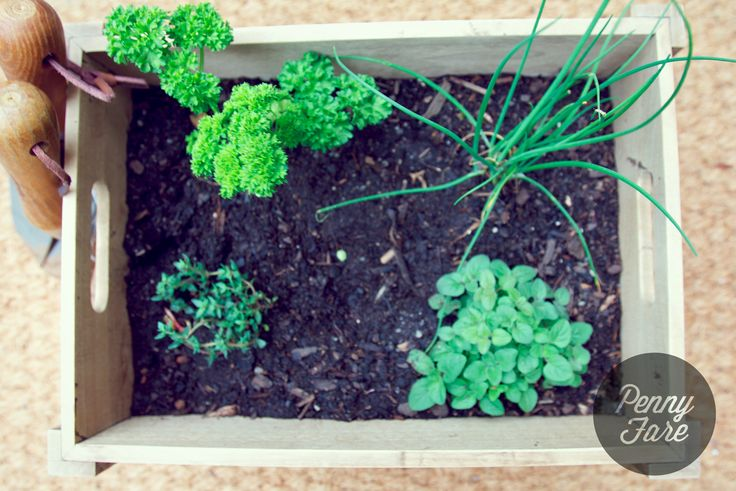 Herbs in a wooden box.