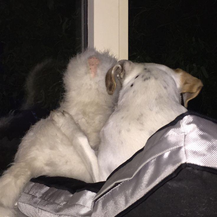 Trunte-pigen og sin bamse