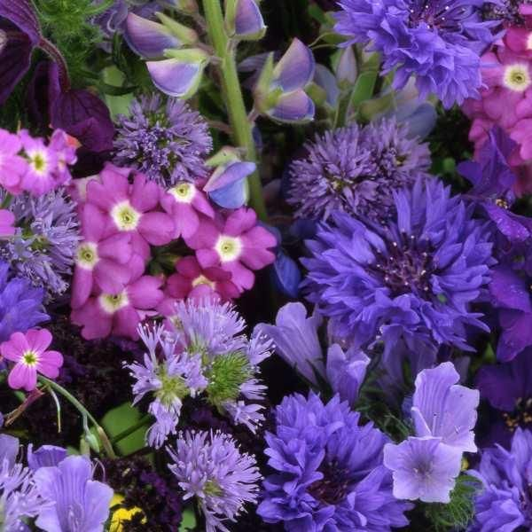 Blomstermix 'Blåt Hav'