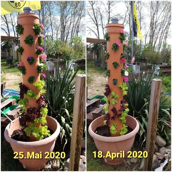 Pflanzsaule Pflanzen Garten Deko Garten