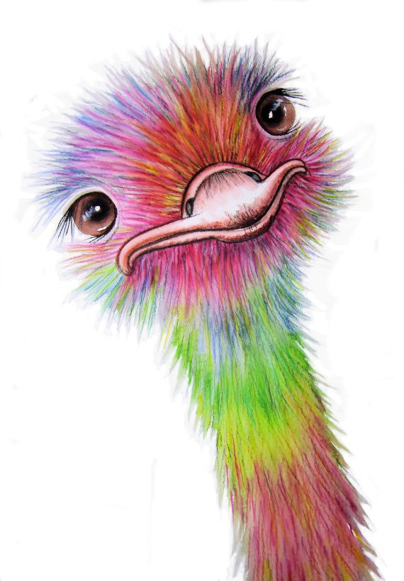 Ostrich art print taken from my original watercolour painting. Available in four sizes from A4 up to A1. A vibrant, colourful and affordable print which