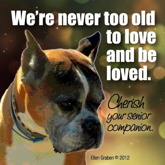 A senior person should adopt a senior dog