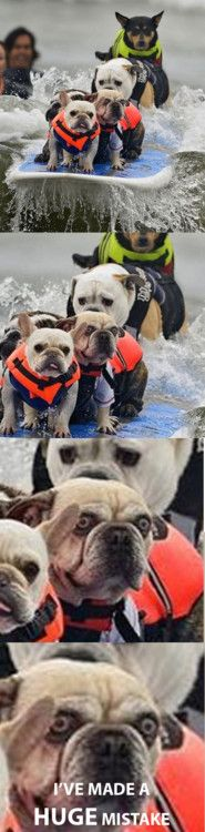 Heehee! That's exactly how my dog would look, assuming I could get her in the water at all!Surf Dogs, Huge Mistakes, Ive Made A Huge Mistake, Too Funny, Make Me Laugh, So Funny, Dog Faces, Can'T Stop Laughing