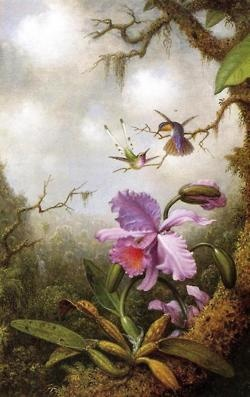 Hummingbirds and orchids botanical illustration