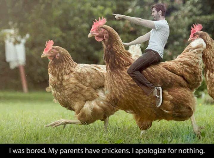 Chicken Pet Quote: 40 Best Chicken Memes Images On Pinterest
