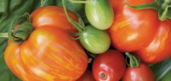 Tomates vertes frites Recettes | Ricardo