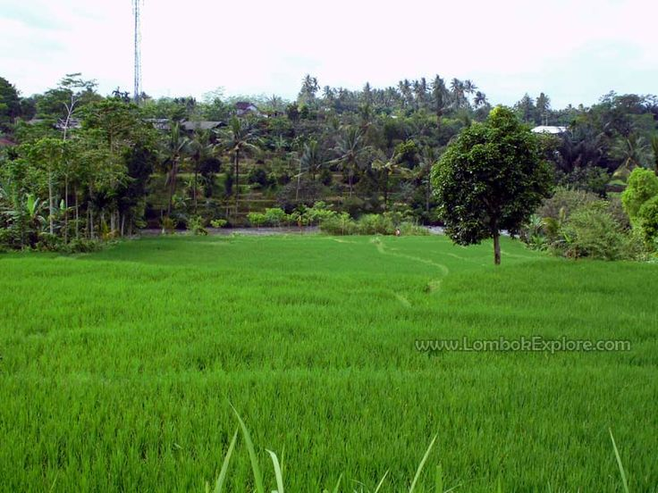 Lingsar village, West Lombok, Indonesia. For more information, please visit www.LombokExplore.com.