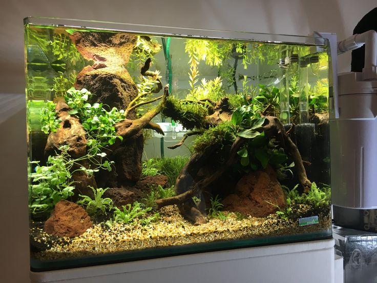 Ibrio scape for dennerle contest your for Decoration zen aquarium