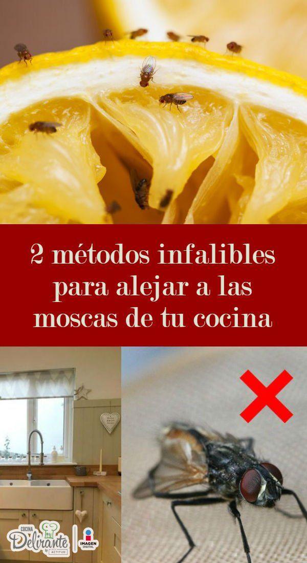Como Acabar Con Las Moscas De Casa 2 Metodos Infalibles Para Alejar A Las Moscas De Tu Cocina Con