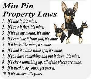 min pin dog rules