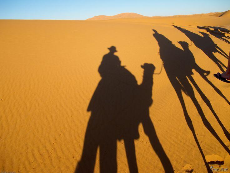 africa shadows - Google zoeken