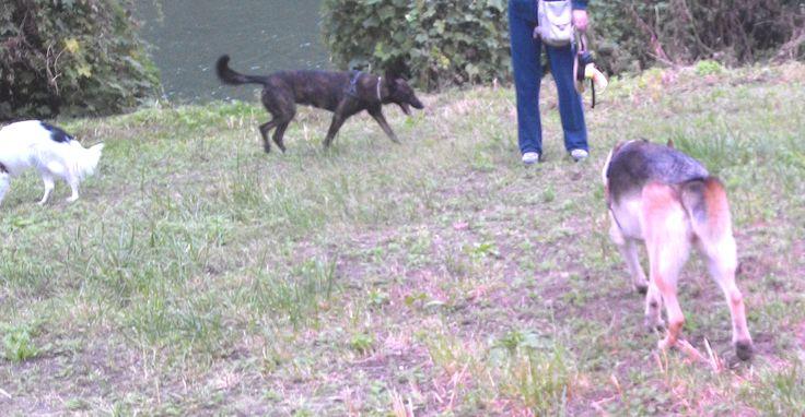 28/09/2015 - Torino con Lela e Luna