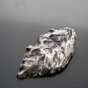 Liść grabu srebrny