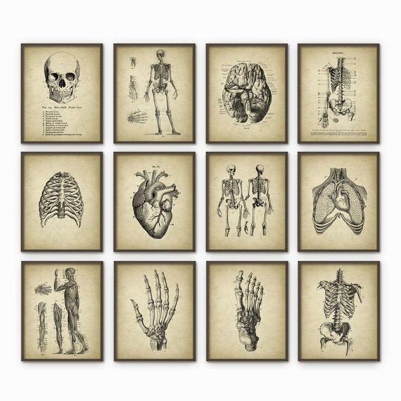 Anatomie humaine Antique Art Print Set de 12 - décoration Vintage anatomie - Antique livre plaque - étudiant en médecine cadeau idée photo ensemble de 12