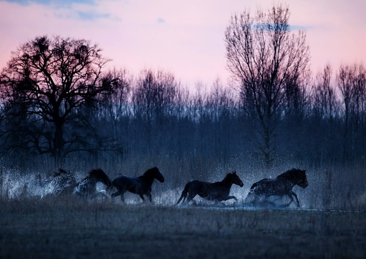 horses in the danube delta