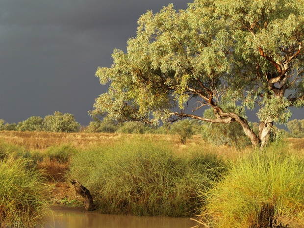 "Winton, Queensland. ""This photo was taken late in the afternoon before a storm at The Long Waterhole, just outside Winton,"" says Robyn. ""It's a beautiful bush camping spot."" Photo Credit: Robyn Herbert"