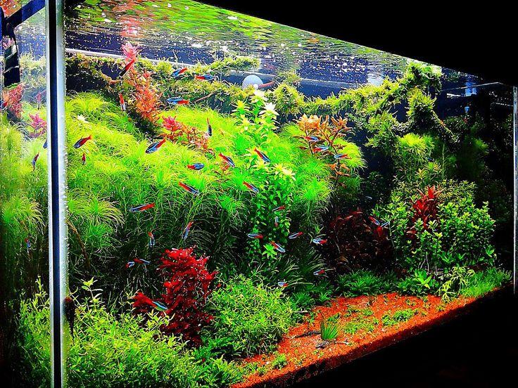 die besten 25 aquarium einrichtungsbeispiele ideen auf pinterest salzwasser aquarien. Black Bedroom Furniture Sets. Home Design Ideas