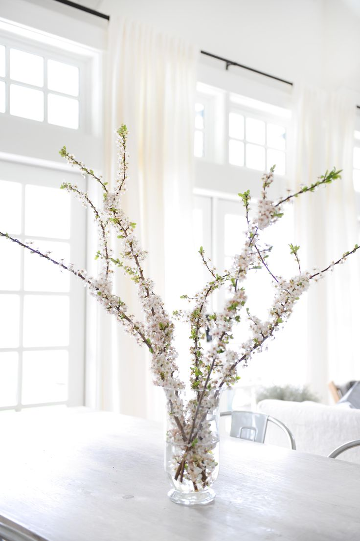 Apple Blossoms in the Spring Photo by Tracey Ayton