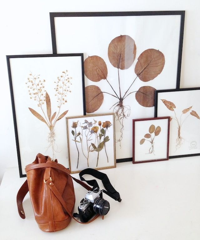 DIY: pressed botanicals