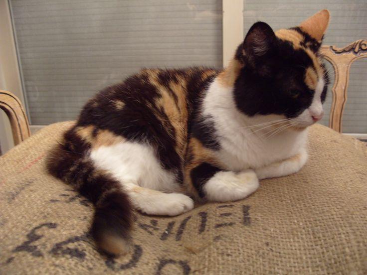 Katten bed jute koffie zak, pet bed burlap coffee sack