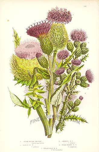 121 best Botanicals images on Pinterest | Painted flowers, Paintings of flowers and Botanical ...