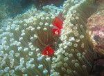 Bali Scuba Diving | Intan Bali Tours