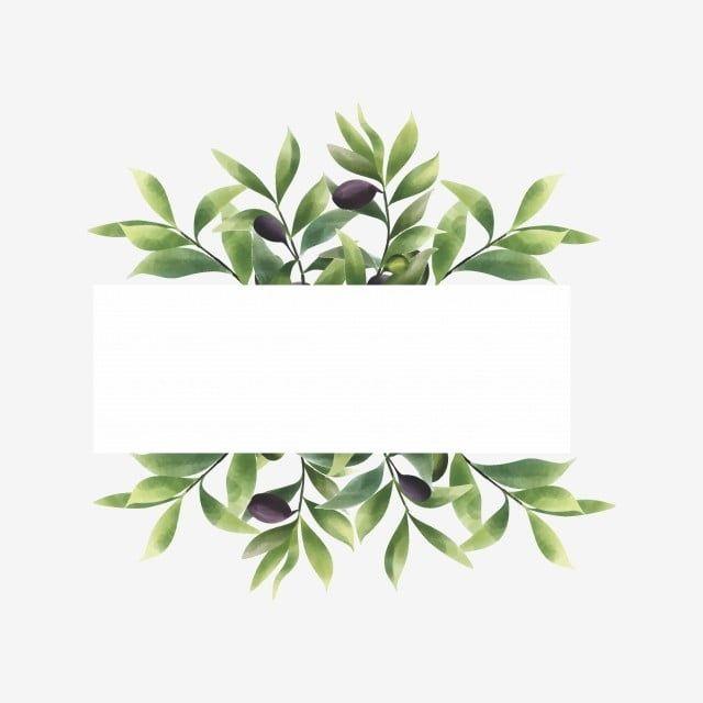 Olive Leaf Frame Frame Watercolor Leaf Png And Vector With Transparent Background For Free Download Leaf Illustration Flower Frame Olive Leaf