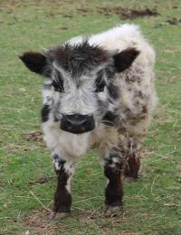 I want this little guy to add to our minature farm...