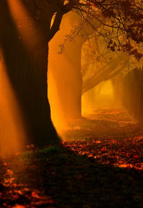 Mystical Forest, Hungary