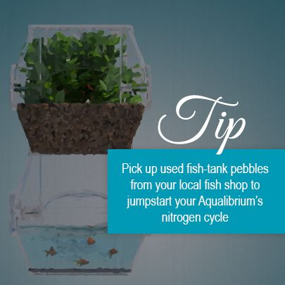 17 best images about aquaponics on pinterest milwaukee for How to cycle a fish tank