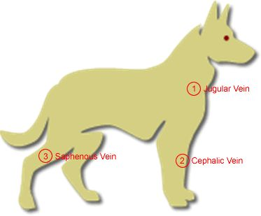 Name Of Blood Vessel You Take A Dogs Pulse From
