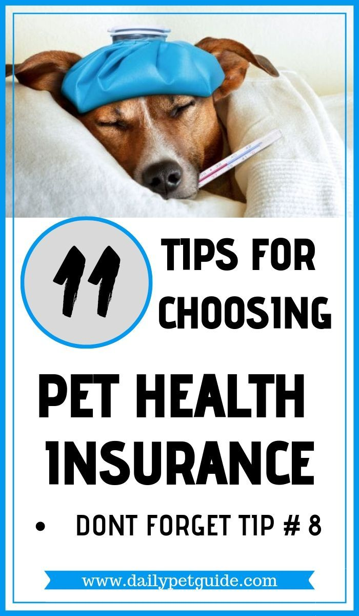 11 Tips For Choosing Pet Health Insurance In 2020 Pet Health